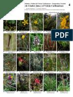 Tungurahua - Common Plants of Cóndor Jaka and El Volcán Carihuairazo-2