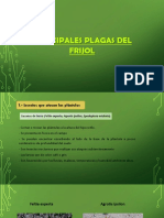 clase N° 10 tuberosa y leguminosa.pptx