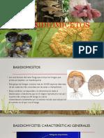 basidiomicetos fitopatologia.pptx