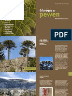 El Bosque de Pewen BOLETIN Nº 1