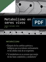 Metabolismo en Los Seres Vivos