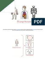El Cuerpo Humano y Los Sentidos