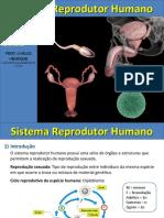 sistema reprodutor.ppt