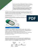 nutricion en plantas.docx