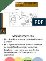 Megasporognesis