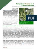 42. Manejo de La Floracion en El Cultivo de Aguacate