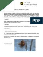 práctica de disección de riñón.pdf