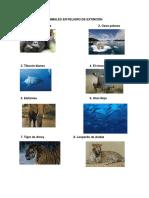 Animales en Peligro de Extinción Imagenes