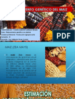 Mejoramiento Genético Del Maiz