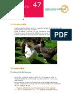 crianza+de+gallinas+ponedoras