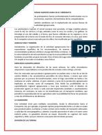 ACTIVIDAD AGROPECUARIA EN EL VIRREINATO.docx