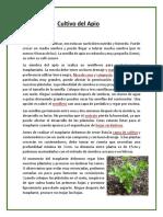 Cultivo-del-Apio.docx