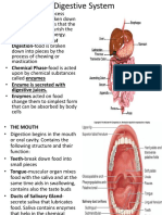 Digestive-System.pptx