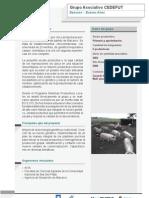 Sistemas Productivos Locales - 2010