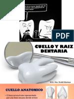 cuello y raiz dentaria