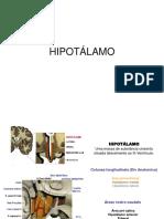 hipotalamo_aula