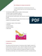 antomia fisiologica de la sipnasis neuromuscular.docx