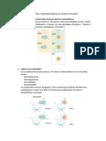ESTRUCTURA Y ORGANIZACIÓN DE LOS ÁCIDOS NUCLEICOS