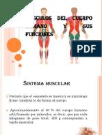 Músculos Del Cuerpo Humano y Sus Funciones