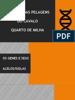 Genética Das Pelagens Do Quarto de Milha