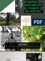 EXPO_ GRUPO MISTOL.pptx