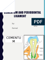 Cementum and Pdl