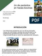Identificación de Parásitos Presentes en Heces Bovinas F