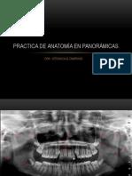 Practica de Anatomía en Panorámicas