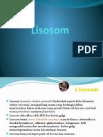 LISOSOM 1.pptx
