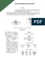 Partes de Planta - Especial Informe