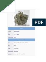 minerales caracteristicas