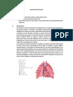 Fisiología Animal, Corazón