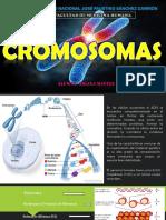 CROMOSOMAS EXPO PDF