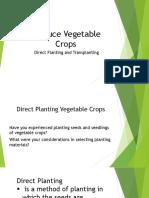 Produce Vegetable Crops-direct seedling.pptx
