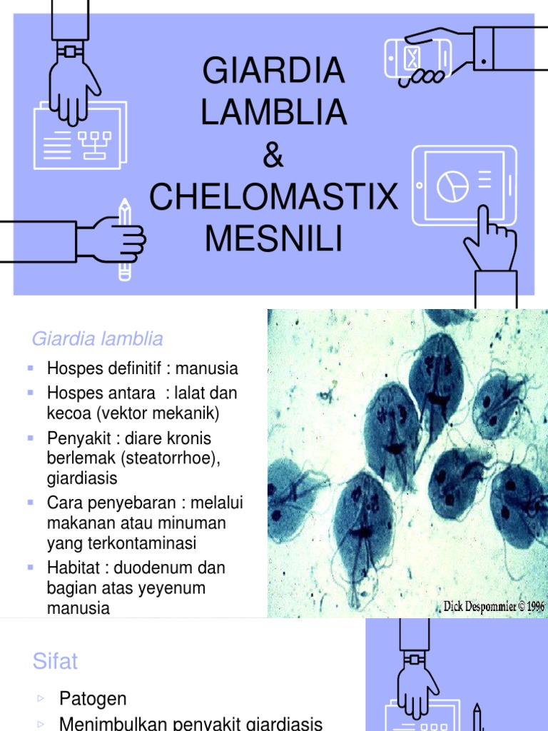 vese giardiasis)