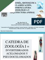 INVERTEBRADOS ACELOMADOS Y PSEUDOCELOMADOS
