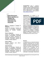 Especificaciones Neurocognitivas Subtipos Esquizofrenia Paranoide No Paranoide