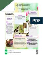 Los órganos de los sentidos en invertebrados.pdf