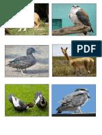 Animales de Zoologico