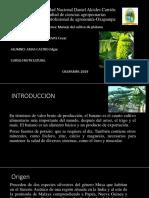 expo cultivo de platano.pptx