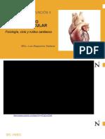 1. Aparato cardiovascular.pptx