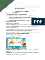 Sistema Nervioso Imprimir