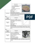 Lista de sulfuros|