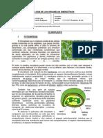 10. Fisiología de Organelos Energéticos