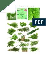 Plantas Aromaticas y Medicinales y Valores