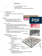 Tissues & Blood Cells 28-L34