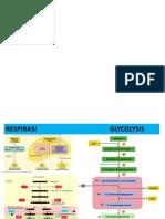 KULIAH7F-Pentosa fosfat pathway.ppt