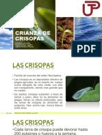 CRIANZA DE CRISOPAS - EXPO