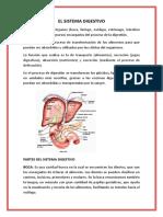Asignacion Del Sistema Digestivo