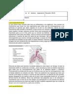 01-Microbiología en el sistema respiratorio (bacterias y hongos)
